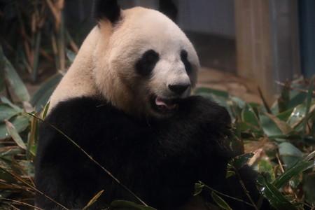 上野動物園106
