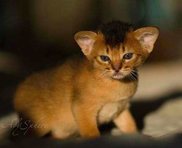 kitten1026_06