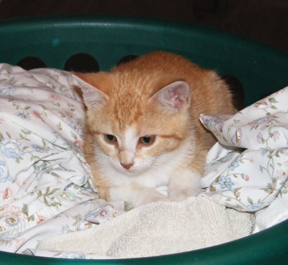 kitten1035_15