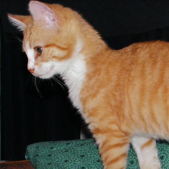 kitten1035_16