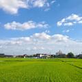 写真: 夏らしい青空と雲、たわわに田んぼの実った稲 - 2