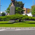 写真: 尾張旭駅前にある、横に長~い松の木 - 2