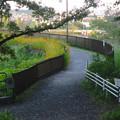 写真: 城山公園 No - 37:夕暮れ時の長池周辺