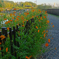 写真: 城山公園 No - 39:長池周辺に咲いていた花