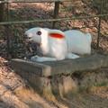 写真: 城山公園にある、奇妙な動物のオブジェ - 16