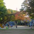 写真: 白川公園:紅葉した木々の下で遊ぶ子供たち - 1