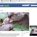写真: Opera 37:Facebookでもビデオポップアプトが可能 - 2