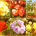 鶴舞公園:様々な色のバラ(2016年5月15日)- 8(フィルター)