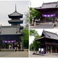 写真: 興正寺の中門 - 1