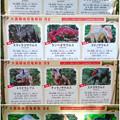 写真: 大高緑地に「ディノアドベンチャー名古屋」がプレオープン! - 99:コース内に設置されてる恐竜解説