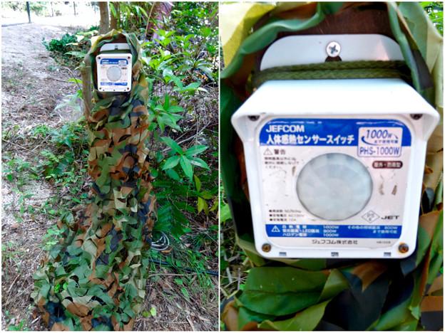 写真: 大高緑地に「ディノアドベンチャー名古屋」がプレオープン! - 100:人感センサー