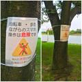 写真: 落合公園:ポケモンGoの影響で「歩きスマホ」や「自転車乗りながらのスマホ」の注意書き - 4