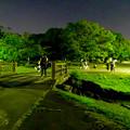 写真: ポケモンGoをやってる人が結構いた、週末の夜の落合公園 - 2