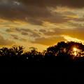 写真: 落合公園:木々のシルエット越しに見た、綺麗な夕日 - 1