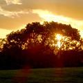 写真: 落合公園:木々のシルエット越しに見た、綺麗な夕日 - 2
