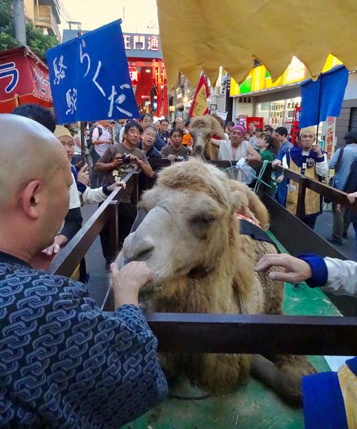 大須大道町人祭 2016:駱駝(らくだ)行列 - 13