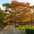 写真: すっかり紅葉してた落合公園の木々 - 1