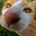 写真: 広角レンズで撮影した猫