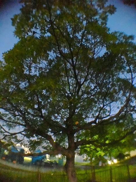 広角レンズで撮影した木