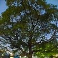 Photos: 広角レンズで撮影した木