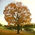 広角レンズ付けて撮影した紅葉した木 - 1
