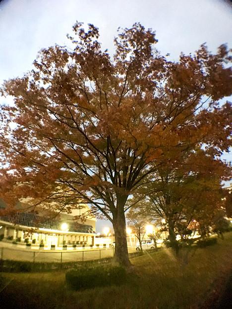 広角レンズ付けて撮影した紅葉した木 - 7