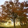 写真: 広角レンズ付けて撮影した紅葉した木 - 7