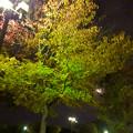 Photos: すっかり秋っぽくなっていた、夜の桃花台中央公園 - 2