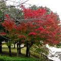 写真: 落合公園の紅葉 - 4
