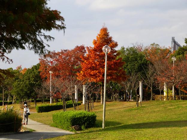 落合公園の紅葉 - 14