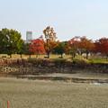写真: 落合公園の紅葉 - 16