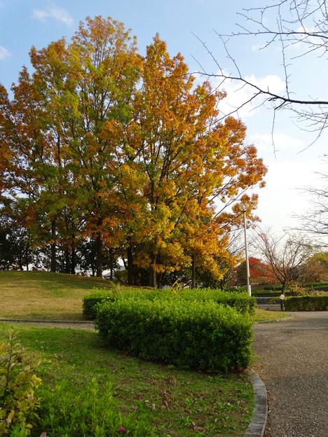 落合公園の紅葉 - 25