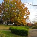 写真: 落合公園の紅葉 - 25