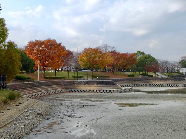 落合公園の紅葉 - 27