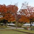 写真: 落合公園の紅葉 - 28