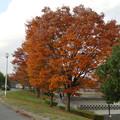 写真: 落合公園の紅葉 - 30