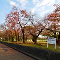 写真: 落合公園の紅葉 - 39