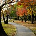 写真: 落合公園の紅葉 - 41
