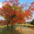 写真: 落合公園の紅葉 - 54