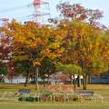 写真: 落合公園の紅葉 - 59