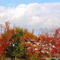 写真: 落合公園の紅葉 - 63