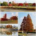 写真: 落合公園の紅葉 - 66