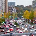 写真: 東山通・星ヶ丘駅付近の紅葉した街路樹 - 2