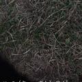 写真: Twitter 6.68.1:Periscopeを使ったライブ動画配信が可能に! - 3