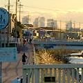 写真: 八田川沿いから見た名駅ビル群 - 14