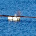 写真: 冬の入鹿池 - 10:ワカサギ集め用の浮島?