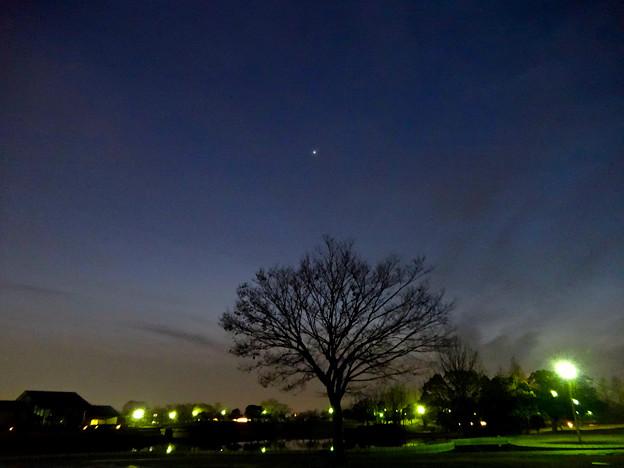 最大光度前日(2017年2月16日)、普段より輝く金星 - 1