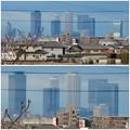大池緑地公園から見た名駅ビル群 - 8