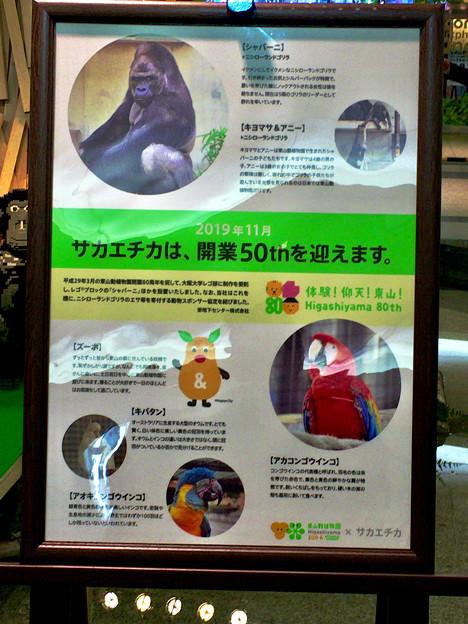 クリスタル広場:東山動植物園の80周年をPRするため、同園の有名なイケメンゴリラ「シャバーニ」のレゴ像を設置 - 7