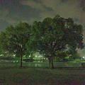 写真: 多機能写真・動画撮影&編集アプリ「Musemage」:HDR >夜間モードで撮影 - 1(モード有効)